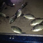 8 delicious slabs officially kickoff crappie season for us.